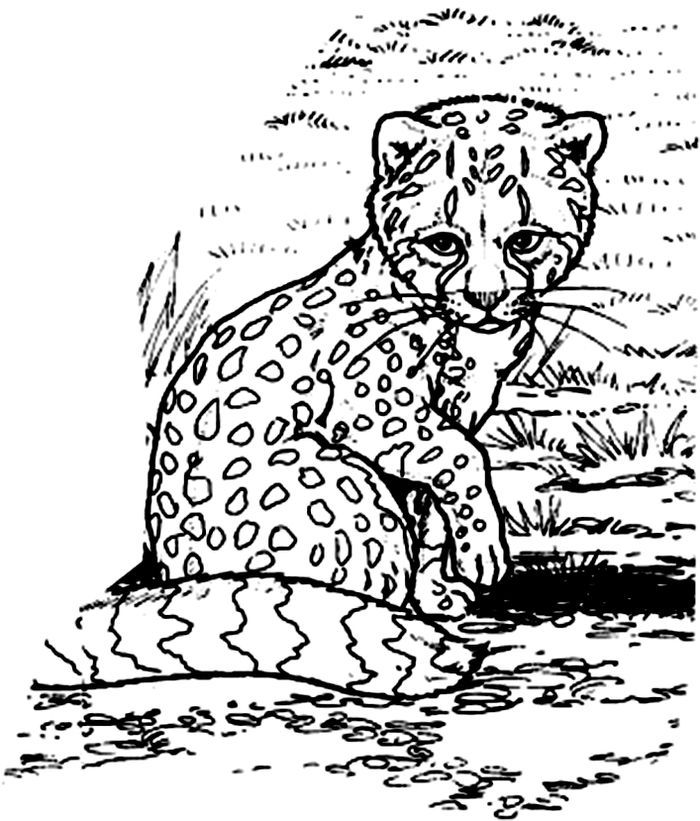 Cheetah Baby Coloring Pages Zoo Animal Coloring Pages Animal Coloring Pages Coloring Pages