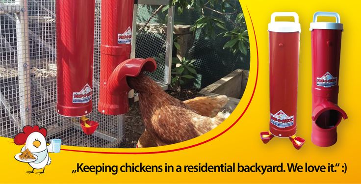 dinea-a-chook-testimonial3.png#chickens feeders #hens #eggs #feeders #homesteading #farmers #drinkers #Townsville #shop #Mealworms #chickens  #PoultryFarming
