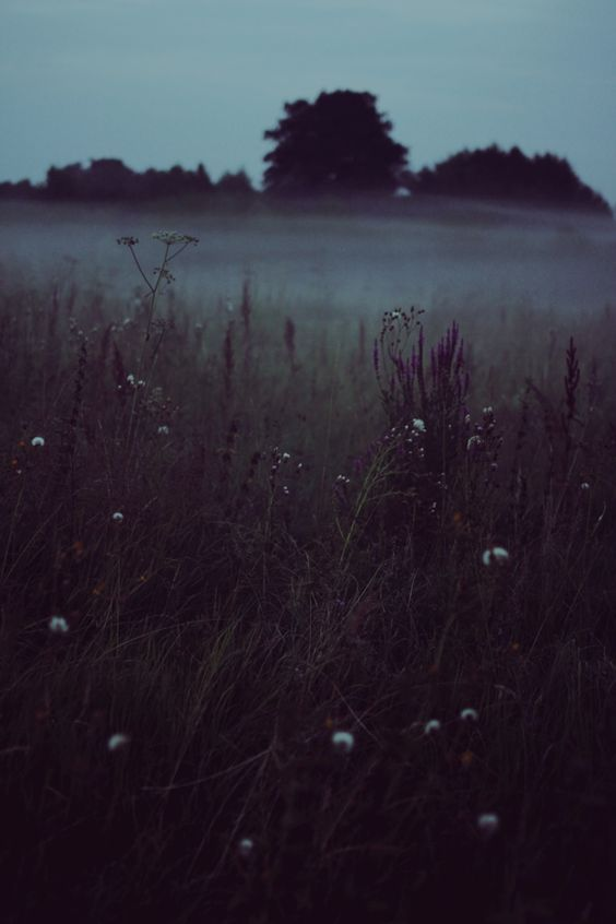 Wir stehen im Nebel in einem Wald, in der Dunkelheit. Wir haben keine Ahnung, was vor uns liegt, aber wir lernen, Zeichen auf der Erde zu lesen, Orte zu markieren, an denen wir Bienen haben …