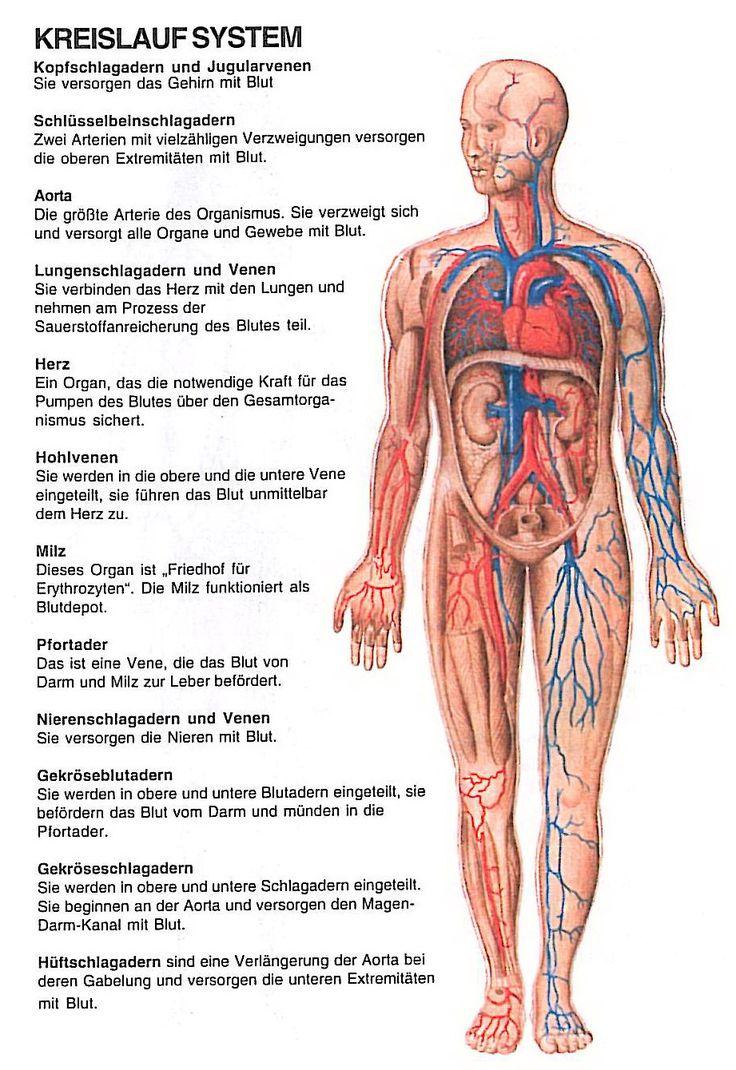 Fantastisch Bedeutung Der Menschlichen Anatomie Zu Studieren Bilder ...