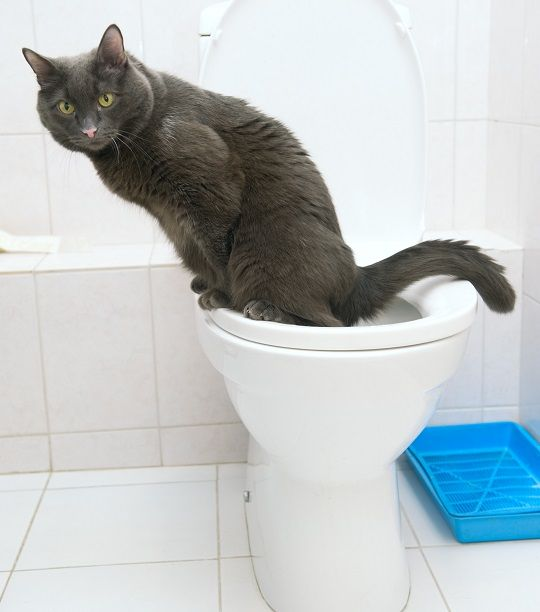 - I have an extra potty that we don't use in our house - we like one main potty only.. This is so cool! I read through it and I am sure I can get my outdoor cats to winter like this.. They have a good time in a litter box with real litter but I use pine shavings - I don't think they would like natural stuff but...before the snow I used dirt and leaves- they really liked it after it snowed I used pine, both are high maintenance - they prefer new soil/pine shavings a lot.
