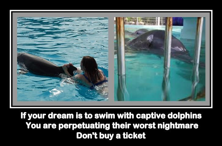 59 Best Images About Sea World Sucks On Pinterest Parks Pools And Dolphins