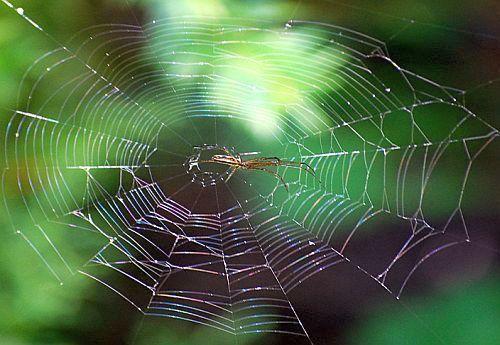 Göttliche Webermeister: die Spinnentiere