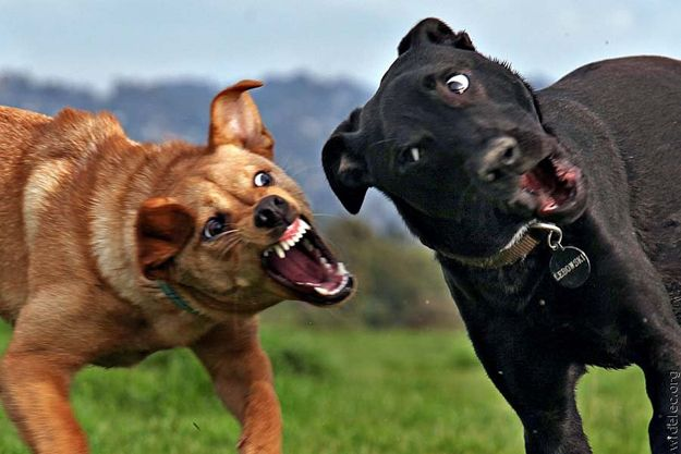 """the caption in my head for the black dog is """"oh no you didn't just snap at me! girl, i will cut you!"""""""