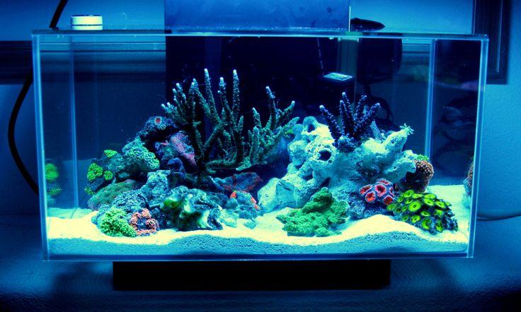 268 best images about nano reef aquariums on pinterest for Aquarium nano marin