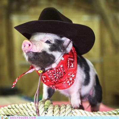 This pig is the cutest sheriff in town with his cowboy cat and red paisley handkerchief. | The Secret Life of Pets