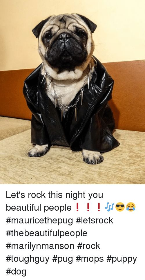 Image result for maurice the pug
