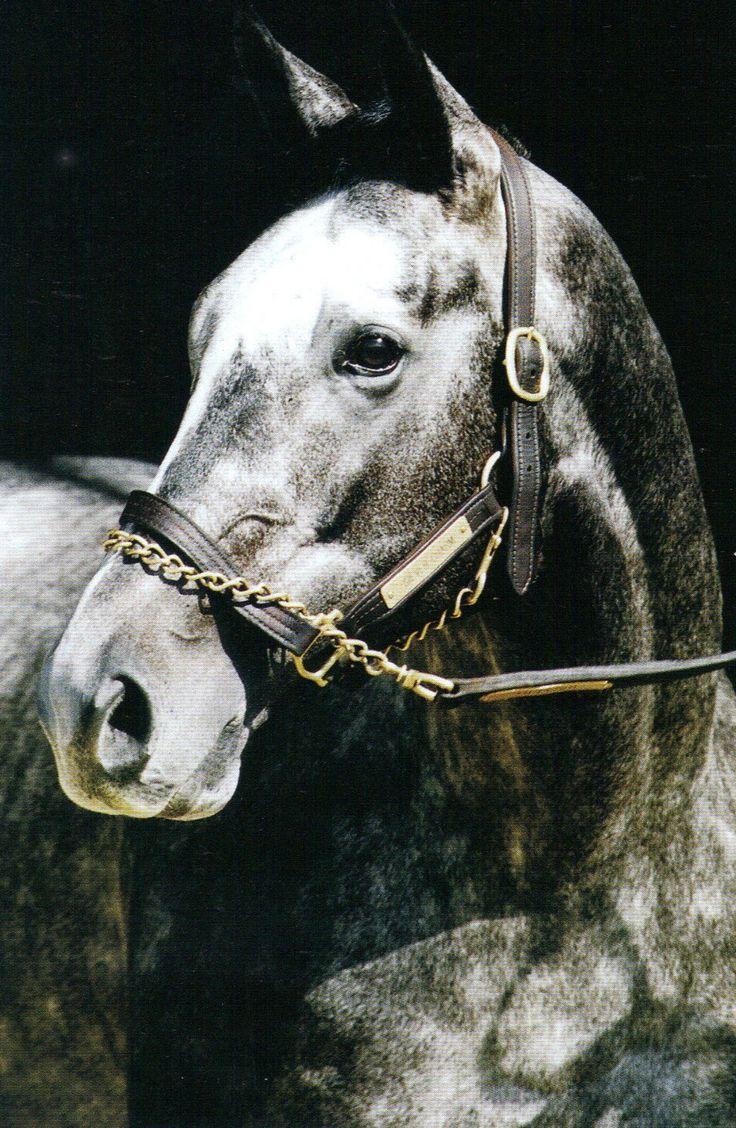 Silver Charm - Winner of the Kentucky Derby & Preakness 1997.