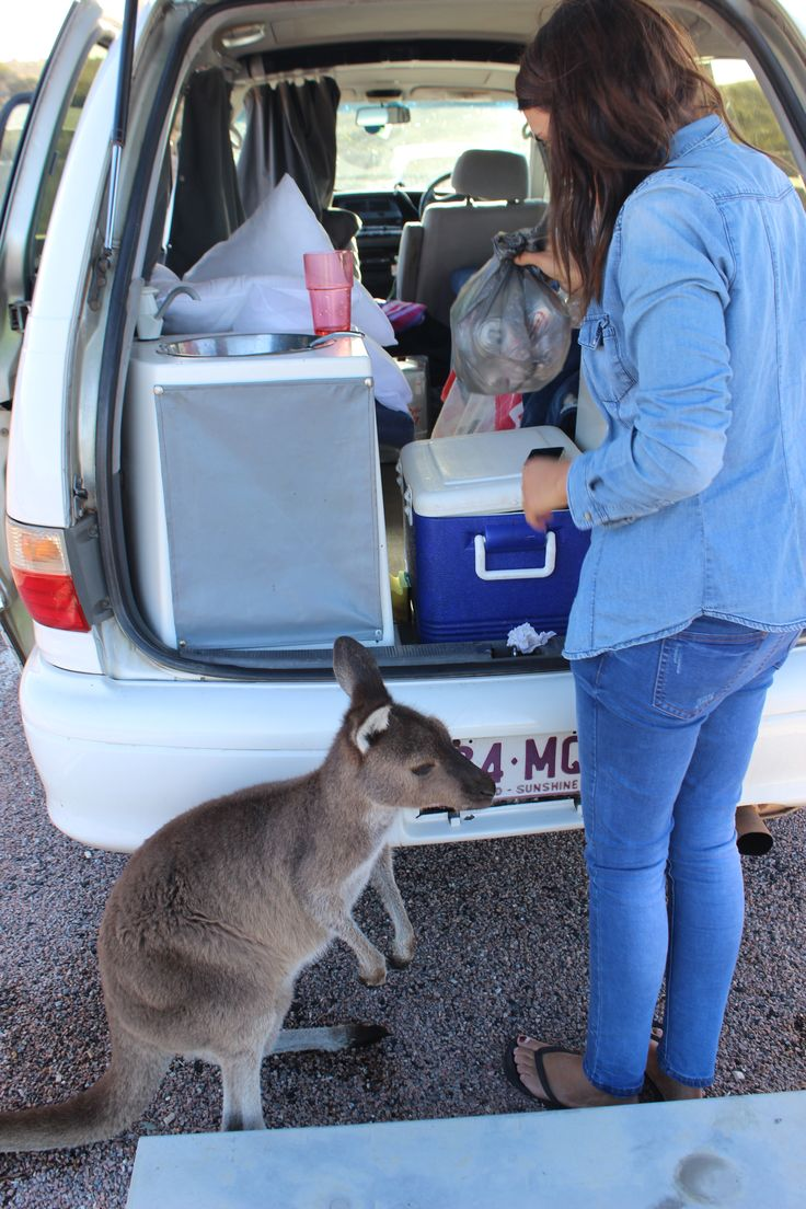 Kangaroo, Esperance - Western Australia