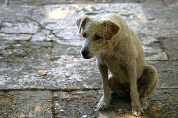 Cosa fare se si trova un animale abbandonato http://www.petsparadise.it/ionontiabbandono/cosa-fare-se-si-trova-un-animale-abbandonato/