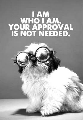 I Am Who I Am Your Approval Is Not Needed! Ha ha  cracked me up.. My dog has doggles for the sun and he dont care either. You can learn alot from our furbabies...