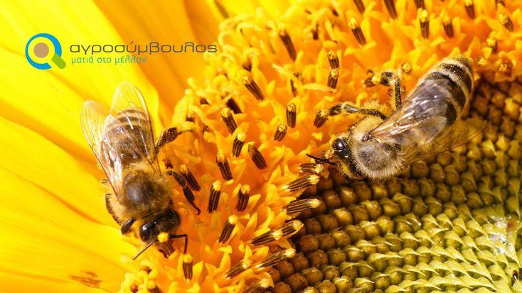 Κανόνες της Ορθής Μελισσοκομικής Πρακτικής