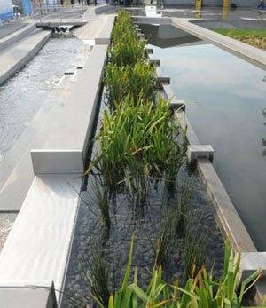17 Best Images About Bioswale Rain Garden On Pinterest
