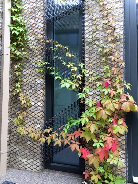 London Open House – Forest Mews  [Virginia Creeper – beginning to turn red]