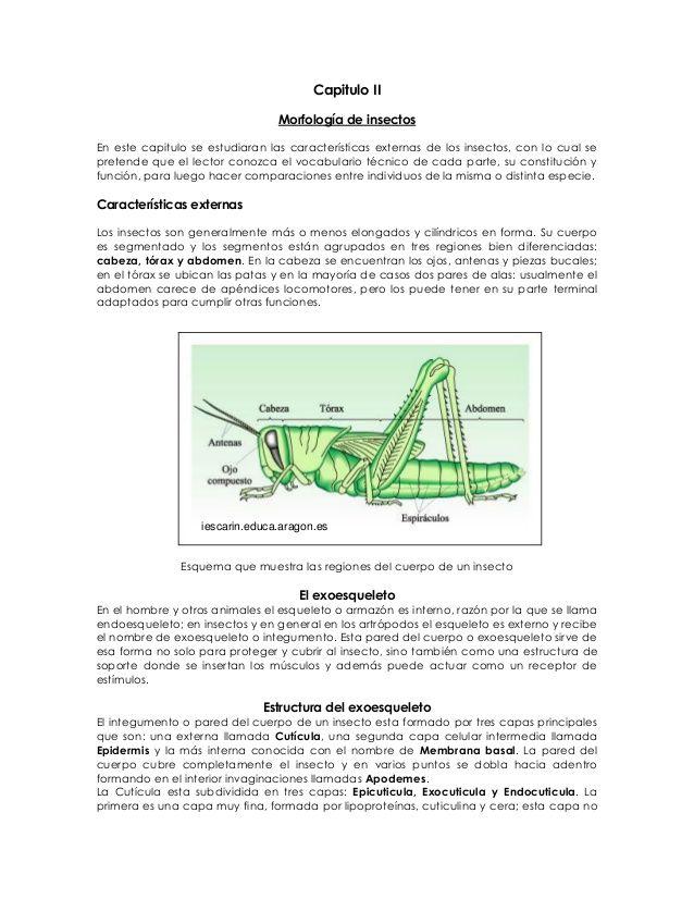 Capitulo II Morfología de insectos En este capitulo se estudiaran las características externas de los insectos, con lo cua...