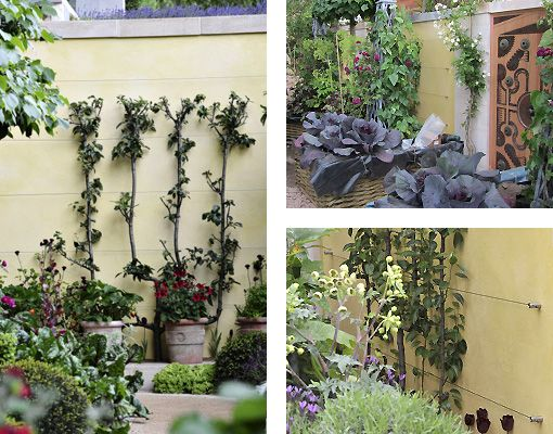 Green Wall Wire Trellis for the M&G Garden