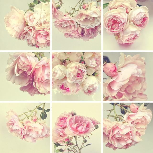 Mosaic of roses