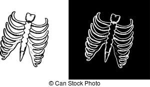 X-ray and skeleton of human rib cage