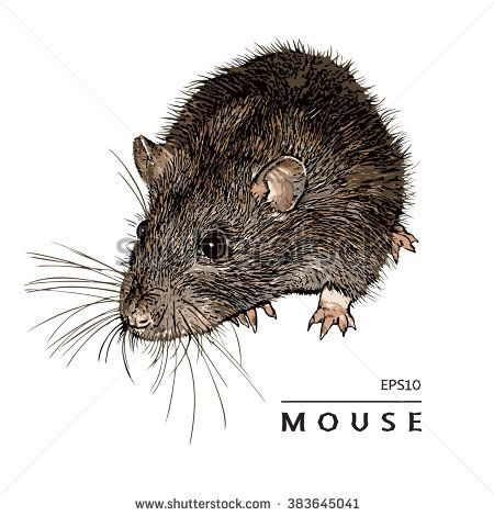 Mouse, Rat. Isolated Image. Colored Vector Illustration.