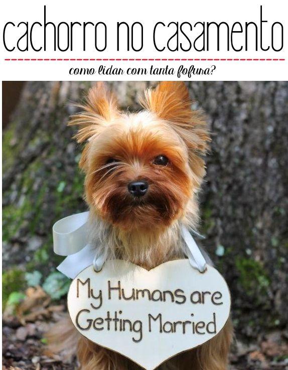 cachorro no casamento. Pets no casamento. Wedding with dogs.