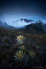 Volcan Nevado del Tolima by Murmeli
