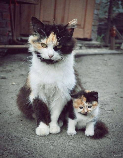 un chaton trop mignon et sa maman                                                                                                                                                                                 Plus