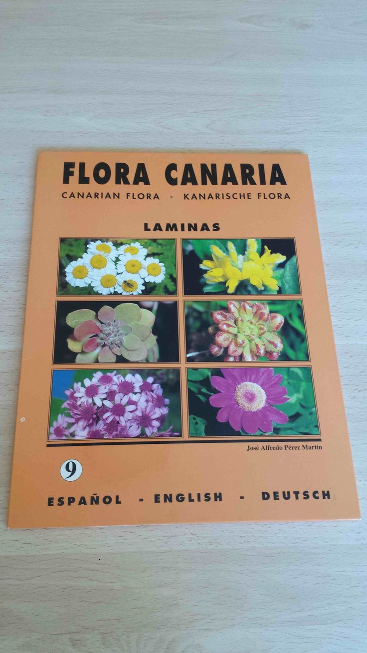20 láminas de Flora Canaria. Canarian flora. Kanarischen Flora. Carpeta 9. Disponible en Ebay: http://www.ebay.es/itm/20-laminas-de-Flora-Canaria-Canarian-flora-Kanarischen-Flora-Carpeta-9-/122058244059?hash=item1c6b3cffdb:g:l6cAAOSwBw5XQ1Mk