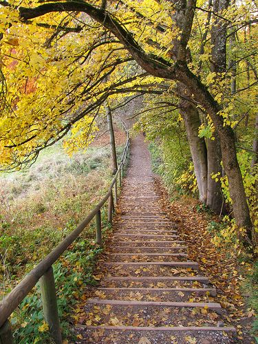 Autumn in Germany: A walk along this path is pure relaxation for the soul.