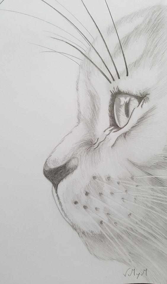 мысли картинки про животных которые можно срисовать представить