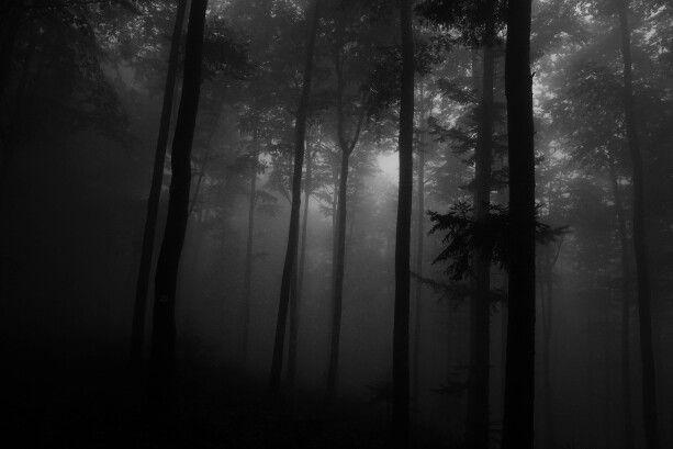 #fog #autumn #morning