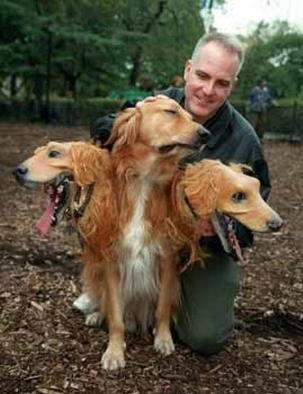Dog Two Headed Three Animal Pictures Www Picturesboss Com