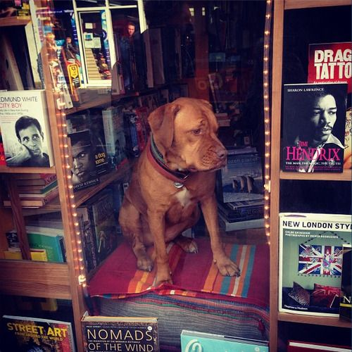 This is the wonderful dog who sits in the window at Brixton's bookmongers