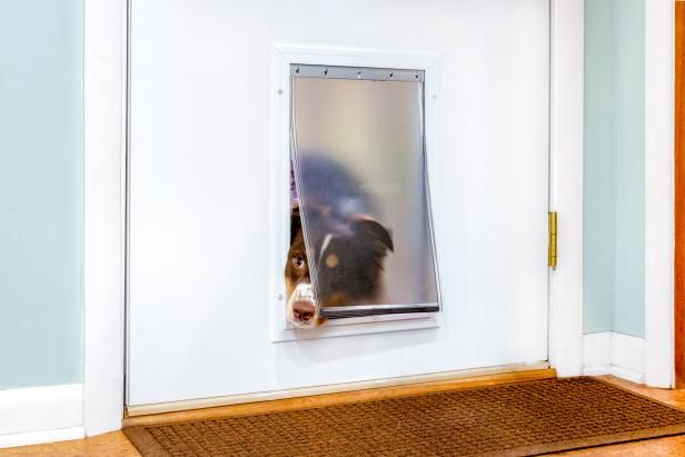 In And Out How To Install A Doggie Door In A Metal Door Pet