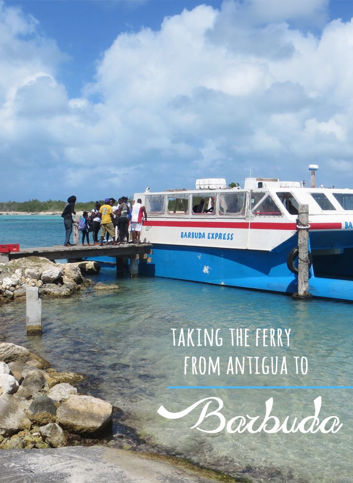 One of the things to do as a day trip if you're staying in Antigua - take the Barbuda Express Ferry over to Barbuda for the day to experience amazing beaches and great snorkeling
