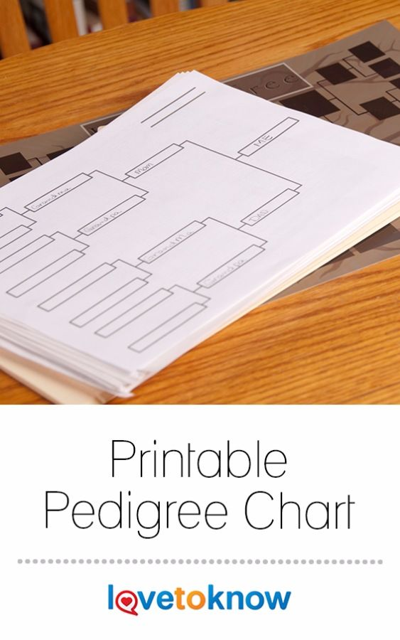 A pedigree chart is essential to understanding how one individual is related to her ancestors. You can use a chart to map out several generations of your ancestors, or you can create a chart for any individual in your tree. Printable pedigrees allow you to customize and print the chart for your files and share your work with other members of your family. #genealogy #printable #free #pedigreechart #familyhistory | Printable Pedigree Chart from #LoveToKnow
