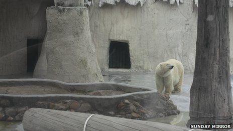 South Yorkshire zoo bid to save 'Mexican' polar bear