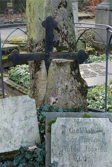 Lápida engullida por un árbol en un cementerio en Bonn, Alemania.