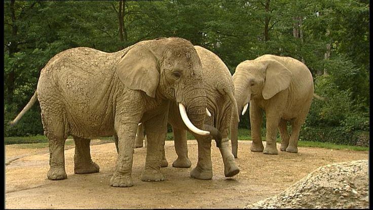 Rekenen/ordenen met kleuters: hoe weeg je een olifant?