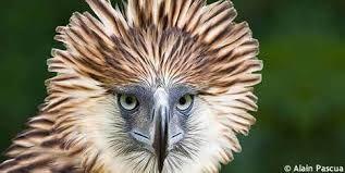 """Résultat de recherche d'images pour """"animaux en voie de disparition liste rouge"""""""