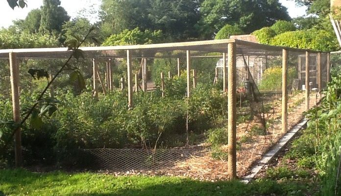 11 Best Fruit Tree Enclosure Images On Pinterest Fruit Trees Vegetable Garden And