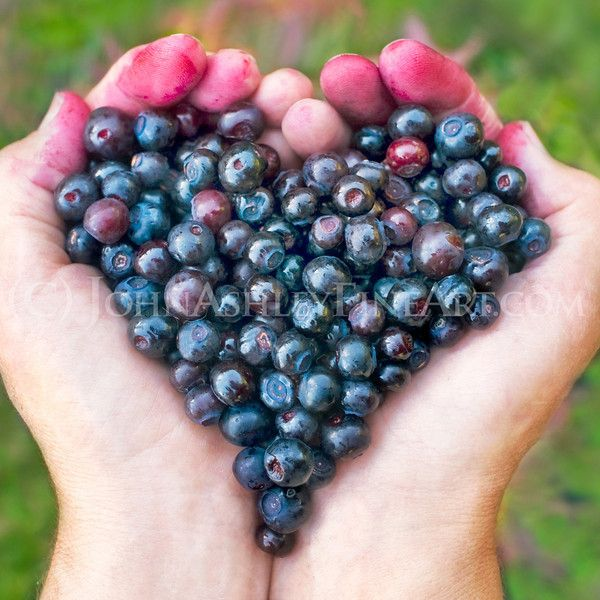 Huckleberries!!!!!!!!!  oh how tasty!!!
