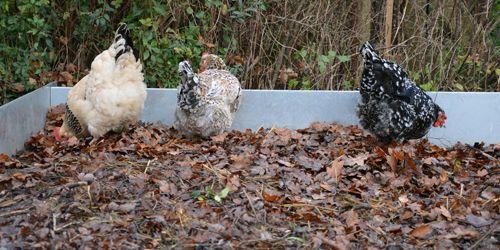Sæt hønsene i arbejde