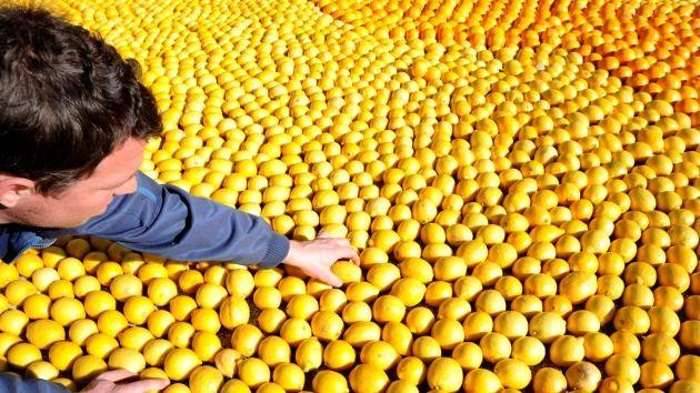 DivaDeaWeag / Il frutto vorrà stamparli in 3D - Prendi frutta fresca con una stampante 3D  da oggi sarà una realtà,dice una società britannica.E' possibile scegliere il gusto che piace e creare nuovi sapori grazie al dispositivo utilizzando una tecnica di gastronomia molecolare.