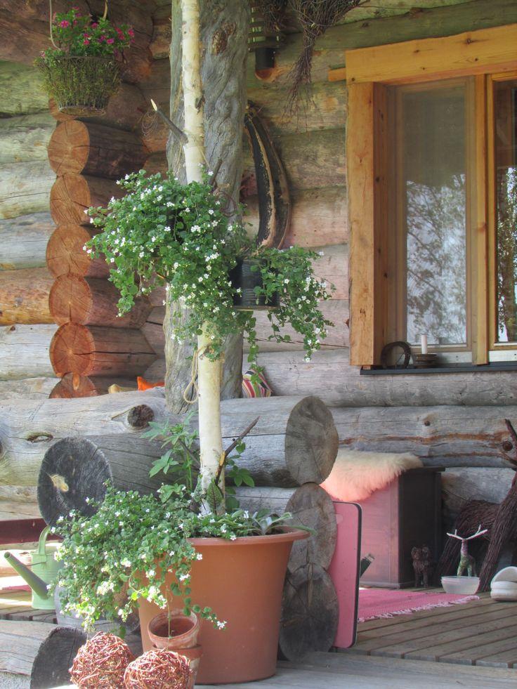 Kesäkukkapuu, runkoon laitettu ruukkuja, joihin olen istuttanut kesäkukkia.
