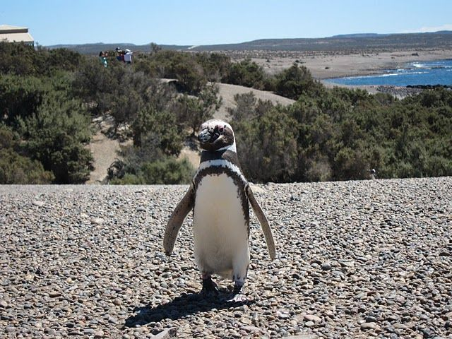 Snorkeling with Sea Lions and Walking with Penguins – Puerto Madryn, Argentina