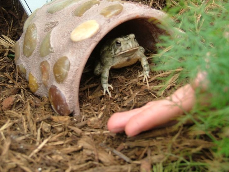 Toad in Toad Abode. toad in the hole? ;o) #homesfornature