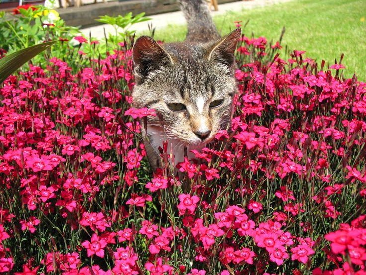 Cat In Flowerbed