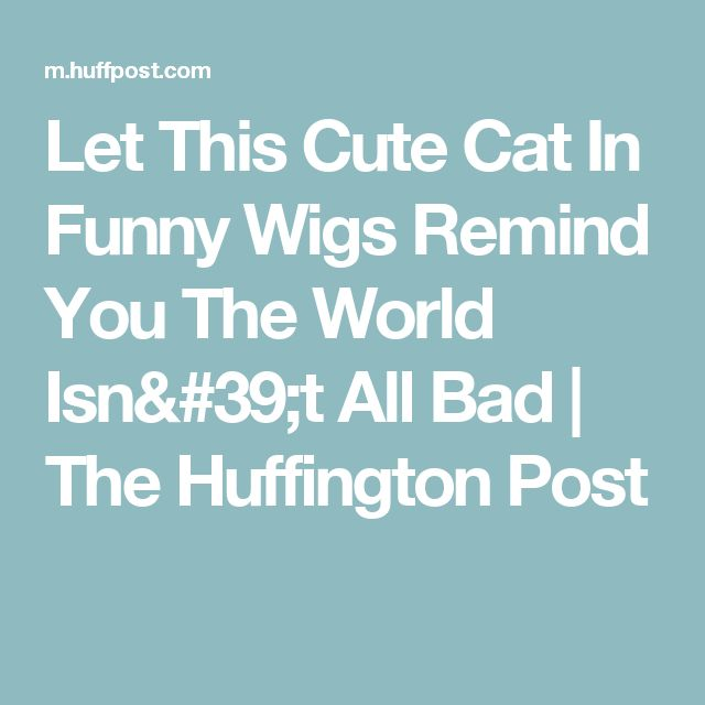 Let This Cute Cat In Funny Wigs Remind You The World Isn't All Bad | The Huffington Post
