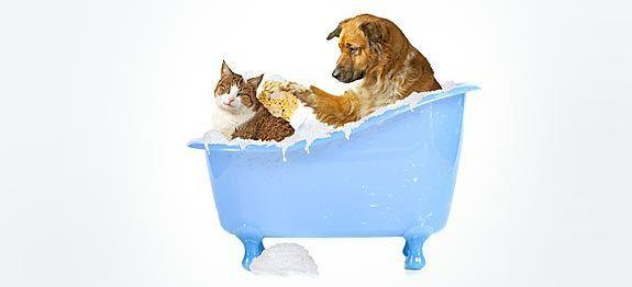 Traitements naturels contre les tiques pour chien et chat. Les remèdes de grands-mères pour fabriquer soi-même un répulsif naturel contre les tiques.