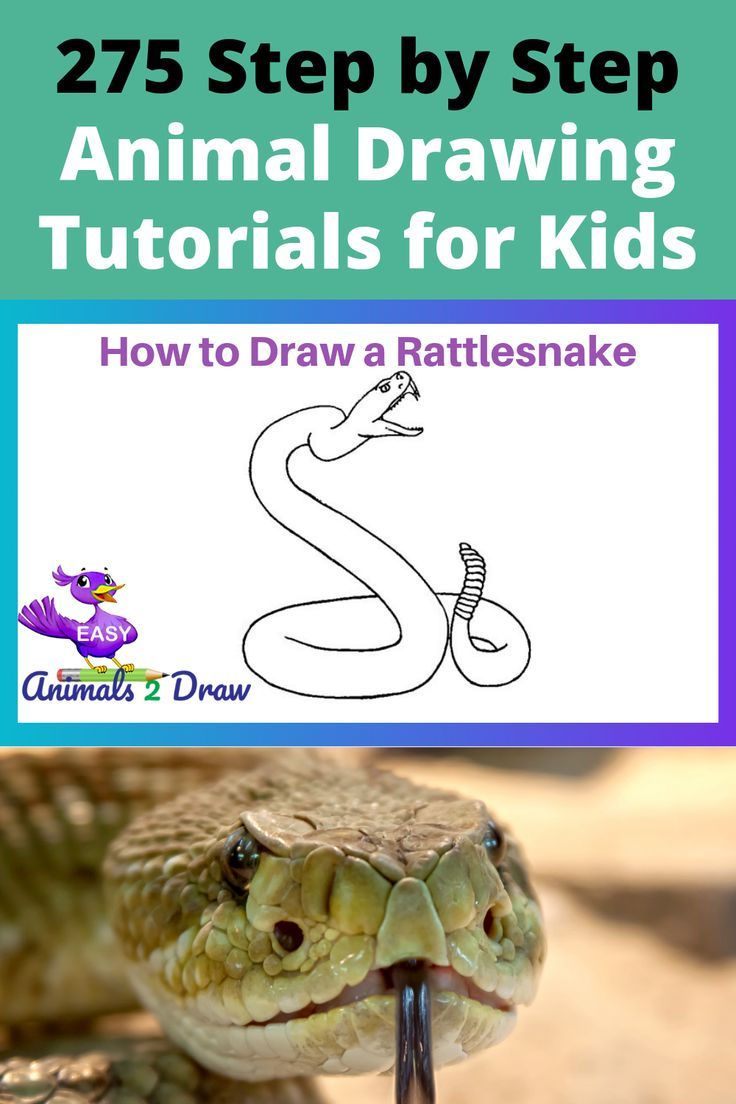 How To Draw A Rattlesnake Step By Step En 2020